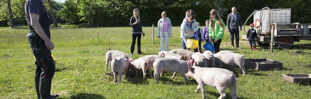 Weekendophold på økologisk bondegård i sønderjylland